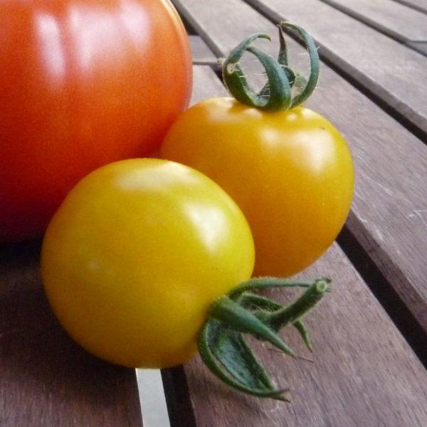 earl of edgecombe tomato