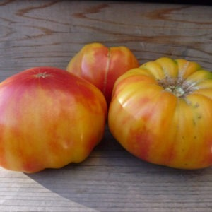 old german tomato